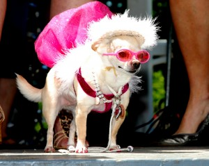 2011_Bark_Costume_Pink_Glasses