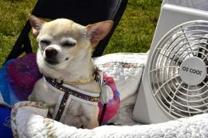 2014-06-08_2014-Dog-Walk_Dog-With-Fan