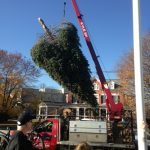 PHOTO ALBUM of the 2016 Main Street Christmas Tree Cutting & Installation